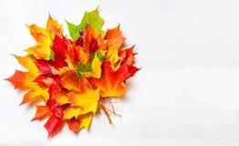 与黄色槭树的秋天构成在白色木tabl离开 库存图片