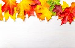 与黄色槭树的秋天构成在白色木tabl离开 免版税库存照片