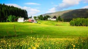 与黄色毛茛花草甸的春天风景在绿色草甸在阳光下 免版税库存图片