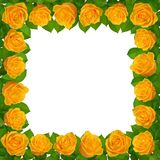 与黄色玫瑰的框架 背景查出的白色 免版税库存图片