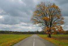 与黄色的一棵树离开靠近乡下路晚秋天 库存照片