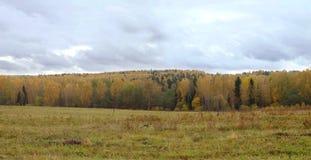 与黄色的土气风景在树离开在远的森林在灰色天空下在多云秋天天 免版税图库摄影