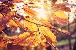 与黄色的树在日落,秀丽过滤器离开 免版税库存图片