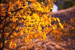 与黄色的树在明亮的秋季风景离开 库存图片
