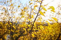 与黄色的树在明亮的秋季风景离开 库存照片