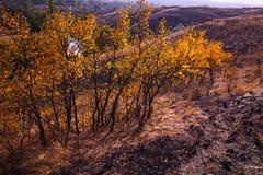与黄色的树在明亮的秋季风景离开 免版税库存照片