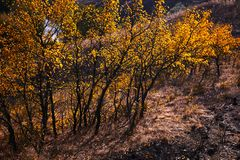 与黄色的树在明亮的秋季风景离开 免版税库存图片