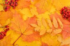 与黄色的秋天背景和 图库摄影