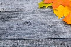 与黄色的秋天背景和 免版税库存照片