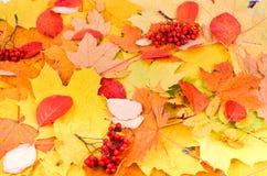 与黄色的秋天背景和 库存图片
