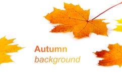 与黄色的秋天背景和 免版税图库摄影