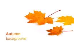 与黄色的秋天背景和 库存照片