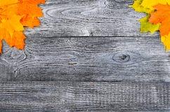 与黄色的秋天背景和 免版税库存图片