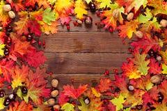 与黄色的秋天背景,与明亮的叶子、杉木锥体、栗子和莓果 构筑在经验丰富的木头的秋天收获与f 图库摄影