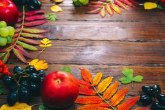 与黄色的秋天背景,与明亮的叶子、杉木锥体、栗子和莓果 图库摄影