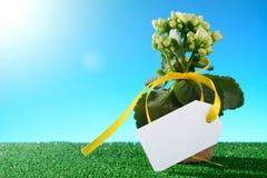与黄色磁带和一朵盆的花的空白的标签 库存照片