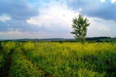 与黄色花的一个领域在重的天空下 免版税库存照片