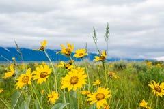 与黄色花的山风景在前景 在山和花的多云天空在绿色草甸 图库摄影