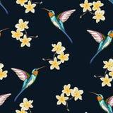 与黄色花的无缝的样式 羽毛分支和异乎寻常的热带哼唱着鸟花卉décor  向量例证