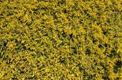 与黄色许多的自然纹理的叶子和绿色 免版税库存图片
