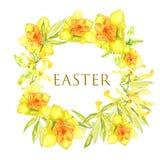 与黄色连翘属植物和黄色水仙的复活节花圈 方形的边界 番红花 皇族释放例证