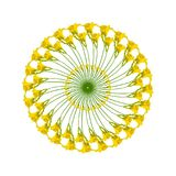与黄色黄花菜圆环的圆样式  库存例证