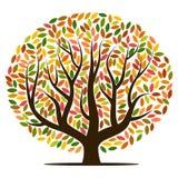 与黄色,橙色,棕色和绿色叶子的秋天树 库存图片