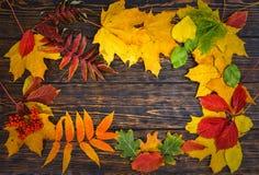 与黄色,红色和绿色的秋天背景在年迈的木头离开 库存图片