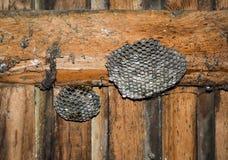 与黄蜂的黄蜂巢坐它 免版税库存照片
