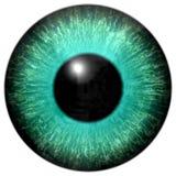 与黑回合的蓝绿色眼珠 向量例证