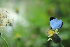 与黑小点的一只小的白色蝴蝶 库存照片