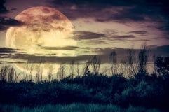 与黑暗的多云和大月亮的五颜六色的天空在tr剪影  库存图片