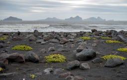 与黑海滩Landeyjarsandur和韦斯特曼纳群岛海岛的冰岛南部的海岸 免版税库存照片