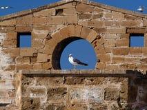 与黑翼的白色鸥坐在圆的窗口的开头的石造壁 库存照片