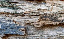 与黑色的浅褐色的木纹理铸造它的表面上 免版税库存图片