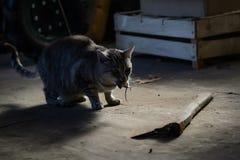 与鼠标的猫 库存照片
