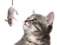 与鼠标的猫 免版税库存图片