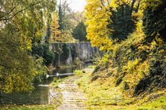 与水、天鹅和鸭子的护城河在秋天时间 图库摄影