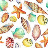 与水下的生活对象的无缝的样式,在白色背景 海洋设计壳,海星 手拉的水彩 免版税库存照片