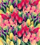 与水下落的新鲜的春天郁金香花 图库摄影