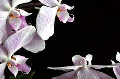 与水下落的浅紫色的兰花 库存照片