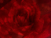 与水下落的浪漫红色玫瑰在abst的玻璃镜子板材 库存照片