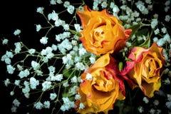 与水下落的玫瑰在叶子 免版税库存图片