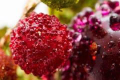 与水下落的红色樱桃 免版税库存图片