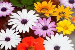 与水下落的花卉构成 免版税库存照片