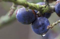 与水下落的蓝莓 图库摄影