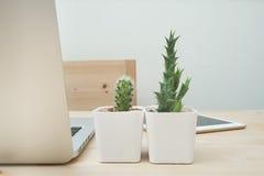 与仙人掌花的办公室桌在罐和膝上型计算机 免版税图库摄影