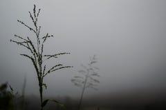 与轻便短大衣的轻便短大衣背景在薄雾 库存照片