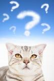 与翻倒猫面孔的问号 免版税库存照片
