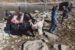 与更加温驯的指南的坐的牦牛在与石头的领域在冻池塘附近在冬天在甘托克附近的塔石Delek 北部锡金 免版税库存照片